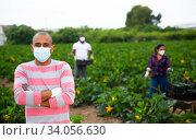 Portrait of latino farmer in protective mask. Стоковое фото, фотограф Яков Филимонов / Фотобанк Лори