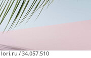 Smooth slow movement of a branch of an green tropical palm tree with long leaves touching a duotone pink blue background. Shadows from branch. Full HD video, 240fps, 1080p. Стоковое видео, видеограф Ярослав Данильченко / Фотобанк Лори