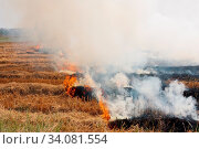 Купить «The dry grass in the field burns inflated by a strong wind», фото № 34081554, снято 6 июля 2020 г. (c) easy Fotostock / Фотобанк Лори