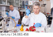 Купить «Female geneticist conducting experiments with fruits and vegetables», фото № 34083458, снято 24 января 2019 г. (c) Яков Филимонов / Фотобанк Лори
