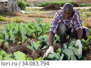 Купить «Male gardener working at homestead», фото № 34083794, снято 7 марта 2019 г. (c) Яков Филимонов / Фотобанк Лори