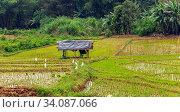 Купить «Paddies asia Shack tropical landscape shack on the edge of a rice paddy in Sri Lanka», фото № 34087066, снято 6 июля 2020 г. (c) easy Fotostock / Фотобанк Лори