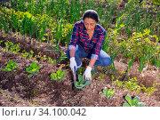 Young woman gardener during planting cabbage. Стоковое фото, фотограф Яков Филимонов / Фотобанк Лори