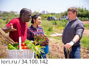 Купить «Communication of happy farmers after harvesting vegetables», фото № 34100142, снято 5 августа 2020 г. (c) Яков Филимонов / Фотобанк Лори