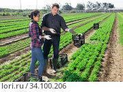 Купить «Communication of happy farmers after harvesting arugula», фото № 34100206, снято 18 мая 2020 г. (c) Яков Филимонов / Фотобанк Лори