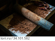 Купить «Grinding cacao beans with chili peppers», фото № 34101582, снято 24 мая 2020 г. (c) Jan Jack Russo Media / Фотобанк Лори