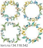 Купить «Elaeagnus leaves in a watercolor style. Frame border ornament square. Aquarelle leaf for background, texture, wrapper pattern, frame or border.», фото № 34118542, снято 6 июля 2020 г. (c) easy Fotostock / Фотобанк Лори