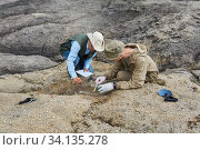 Paleontologists have discovered a fossil in the desert. Стоковое фото, фотограф Евгений Харитонов / Фотобанк Лори