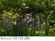 Купить «Log hut in the thicket of blooming lupine», фото № 34135286, снято 24 июня 2020 г. (c) Евгений Харитонов / Фотобанк Лори