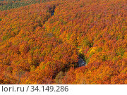 Купить «Aerial view of red leaf autumn fall season for Forest wodland in Aomori Tohoku Japan», фото № 34149286, снято 7 августа 2020 г. (c) easy Fotostock / Фотобанк Лори