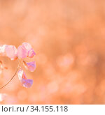 Summer natural floral background, greeting card, poster in bed pink, orange and beige tones with copy space with a beautiful delicate flower in artwork. Стоковое фото, фотограф Светлана Евграфова / Фотобанк Лори