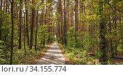Купить «Walking way through the forest.», фото № 34155774, снято 13 июля 2020 г. (c) Ярослав Данильченко / Фотобанк Лори