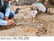 Купить «Paleontologists have discovered a fossil in the desert close-up», фото № 34156290, снято 13 июня 2020 г. (c) Евгений Харитонов / Фотобанк Лори