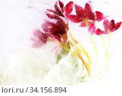 Купить «Chinese honeysuckle flowers frozen», фото № 34156894, снято 14 мая 2020 г. (c) Tamara Kulikova / Фотобанк Лори