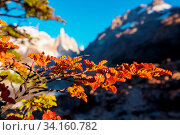 Autumn season in Patagonia mountains, South America, Argentina. Стоковое фото, фотограф Zoonar.com/Galyna Andrushko / easy Fotostock / Фотобанк Лори