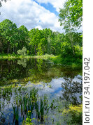 Купить «Forest landscape of a lake. Forest around the lake on a summer, sunny day», фото № 34197042, снято 13 июня 2020 г. (c) Григорий Стоякин / Фотобанк Лори