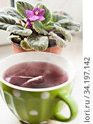 Купить «green cup with tea and a pot of violets», фото № 34197142, снято 29 сентября 2014 г. (c) Tetiana Chugunova / Фотобанк Лори