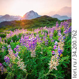 Mountain meadow in sunny day. Natural summer landscape. Mountains in Alaska. Стоковое фото, фотограф Zoonar.com/Galyna Andrushko / easy Fotostock / Фотобанк Лори