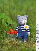 Игрушки. Кот с ведром клубники и ромашкой. Стоковое фото, фотограф Dmitry29 / Фотобанк Лори
