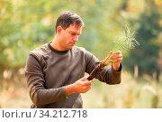Waldarbeiter oder Förster kontrolliert die Qualität der Wurzel von Kiefer Setzling. Стоковое фото, фотограф Zoonar.com/Robert Kneschke / age Fotostock / Фотобанк Лори