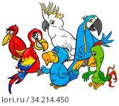 Cartoon Illustration of Colorful Parrots Birds Animal Characters Group. Стоковое фото, фотограф Zoonar.com/Igor Zakowski / easy Fotostock / Фотобанк Лори