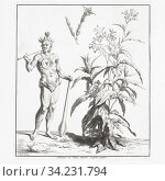 An American Indian smokes a pipe beside a tobacco plant. After an early 18th century print by French engraver Bernard Picart. Стоковое фото, фотограф Classic Vision / age Fotostock / Фотобанк Лори