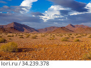 Sossusvlei region, Namib desert, Namibia, March. Стоковое фото, фотограф Ernie Janes / Nature Picture Library / Фотобанк Лори