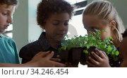 Group of kids holding plants in the class. Стоковое видео, агентство Wavebreak Media / Фотобанк Лори