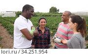 Купить «Communication of happy farmers after harvesting zucchini on the field», видеоролик № 34251954, снято 1 июня 2020 г. (c) Яков Филимонов / Фотобанк Лори
