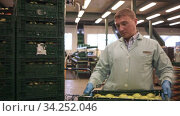 Купить «Male employee in blue uniform carrying box with fresh ripe apples selected on sorting line», видеоролик № 34252046, снято 4 августа 2020 г. (c) Яков Филимонов / Фотобанк Лори