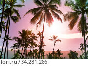 Green Palms on tropical beach. Стоковое фото, фотограф Zoonar.com/Galyna Andrushko / easy Fotostock / Фотобанк Лори