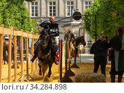 Man dressed as medieval knight riding Spanish stallion, jousting at quintain. Ommegang religious and historical pageant procession, Brussels, Belgium. June 2019. Стоковое фото, фотограф Kristel Richard / Nature Picture Library / Фотобанк Лори
