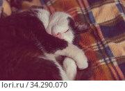 Sleeping cat on hiking sleeping bag. Стоковое фото, фотограф Zoonar.com/Galyna Andrushko / easy Fotostock / Фотобанк Лори