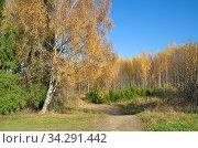 Осенний пейзаж в солнечный день. Стоковое фото, фотограф Елена Коромыслова / Фотобанк Лори