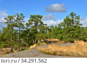 Picturesque landscape with pine trees on rock. Aland Islands (2014 год). Стоковое фото, фотограф Валерия Попова / Фотобанк Лори