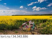 Велопрогулка по рапсовому полю. Стоковое фото, фотограф Литвяк Игорь / Фотобанк Лори