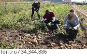Skilled male farmers working on vegetable plantation on spring day, picking potatoes. Стоковое видео, видеограф Яков Филимонов / Фотобанк Лори