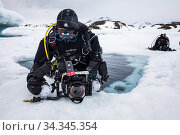 Diver checking camera before diving under sea ice near iceberg. Tasiilaq, East Greenland. April 2018. Редакционное фото, фотограф Franco  Banfi / Nature Picture Library / Фотобанк Лори