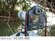 Camera viewfinder with Jaguar (Panthera onca) Pantanal, Mato Grosso, Brazil. Редакционное фото, фотограф Franco  Banfi / Nature Picture Library / Фотобанк Лори