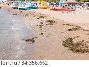 Badestrand voll Seetang und Algen - Badeurlaub am Meer. Стоковое фото, фотограф Zoonar.com/Alfred Hofer / easy Fotostock / Фотобанк Лори