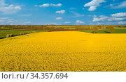 Drohnen Flug- und Luftaufnahme über einem Rapsfeld Drones flight and... Стоковое фото, фотограф Zoonar.com/Volker Schlichting / easy Fotostock / Фотобанк Лори