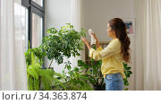 happy asian woman cleaning houseplant. Стоковое видео, видеограф Syda Productions / Фотобанк Лори