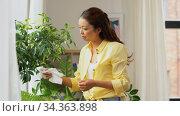 happy asian woman cleaning houseplant. Стоковое видео, видеограф Syda Productions / Фотобанк Лори