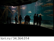 People viewing fish in aquarium, New Orleans-Louisiana USA, November 2006. Стоковое фото, фотограф John Cancalosi / Nature Picture Library / Фотобанк Лори