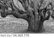 Ralswiek ist eine deutsche Gemeinde im Landkreis Vorpommern-Rügen... Стоковое фото, фотограф Zoonar.com/Stephan Herlitze / easy Fotostock / Фотобанк Лори