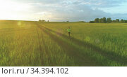 Sporty child runs through a green wheat field. Evening sport training exercises at rural meadow. A happy childhood is a healthy way of life. Radial movement, sun rays and grass. Стоковое видео, видеограф Александр Маркин / Фотобанк Лори