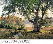 Flickel Paul - Old Beech Tree - German School - 19th and Early 20th... Стоковое фото, фотограф Artepics / age Fotostock / Фотобанк Лори