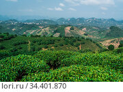 A beautiful shot of a tea plantation on a sunny day. Стоковое фото, фотограф Zoonar.com/Pawel Opaska / easy Fotostock / Фотобанк Лори