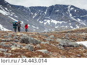 Team of Caucasian hikers coming on stone terrain in mountains, hiking in northern tundras. Стоковое фото, фотограф Кекяляйнен Андрей / Фотобанк Лори