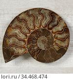 Fossilized Ammonite - ancient mollusc of the order cephalopods. Стоковое фото, фотограф Алексей Кузнецов / Фотобанк Лори